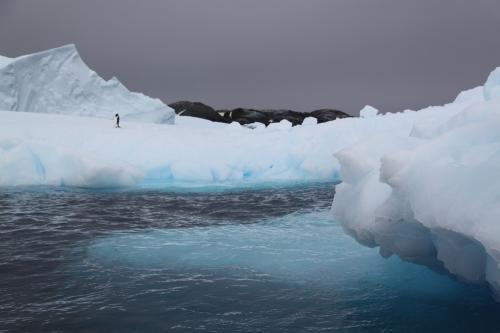Antarctica - Eenzame Pinguin