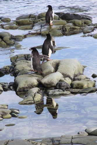 Antarctica - Mirror Pinguin