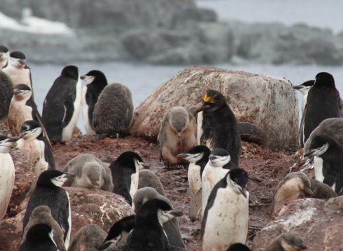 Antarctica - Pinguin imperium