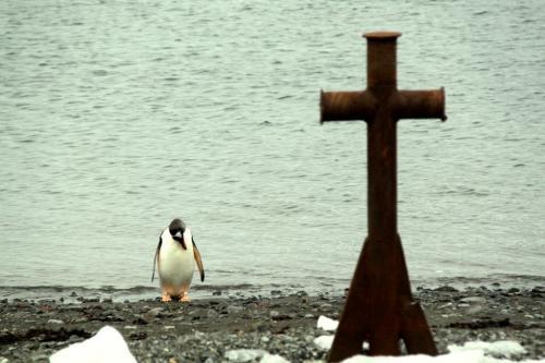 Antarctica - Pinguin met kruis
