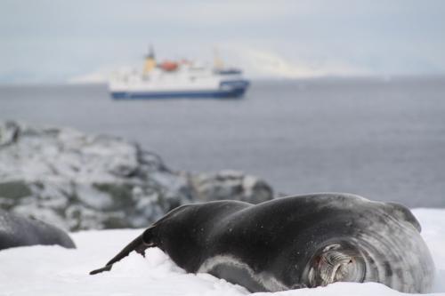 Antarctica - Zeehonden overdekte stranden