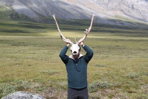 Arctic - Erwin caribou