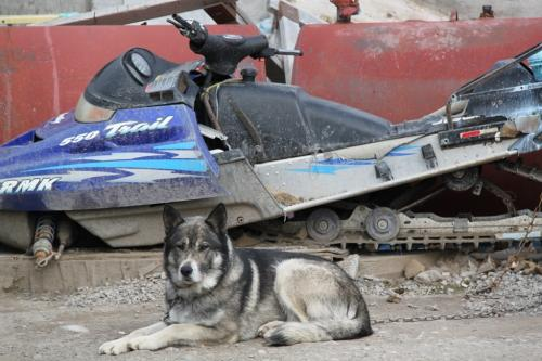 Arctic - dogsled & snowmobile