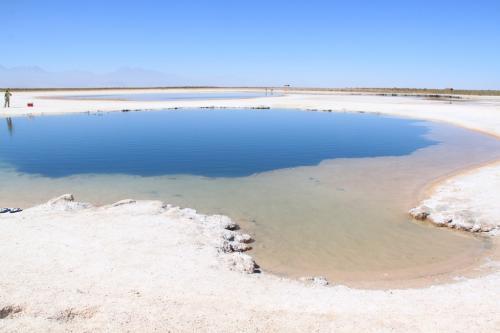 Atacama- Cejar laguna