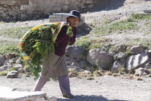 Atacama - Worker