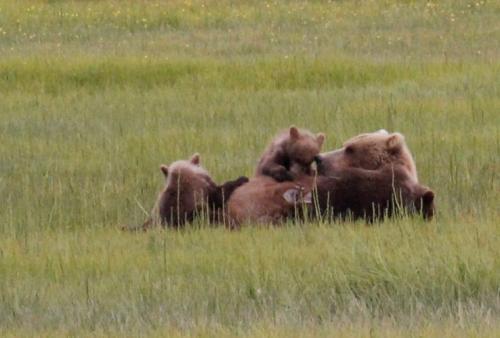 Bearcamp - Zogend