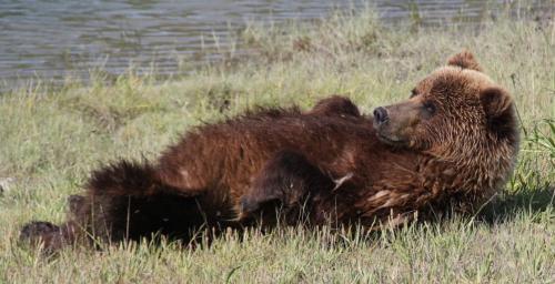 Bearcamp - beer ruglig