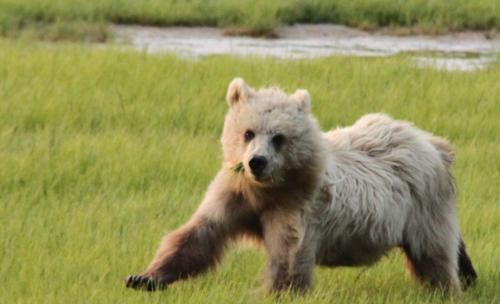 Bearcamp - blondie op de vlucht