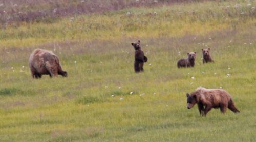 Bearcamp - mum & nieuwsgierige drieling