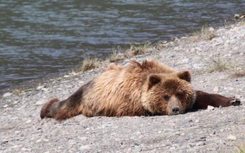 Bearcamp - no pants op de buik