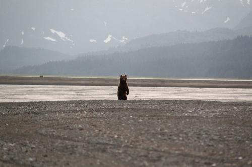 Bearcamp - staande beer