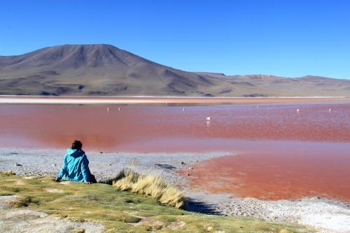 Bolivia - Dédé laguna colorado