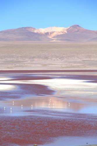 Bolivia -  Lago Colorado & flamingos