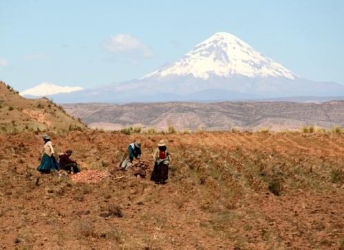 Bolivia - Oogsten
