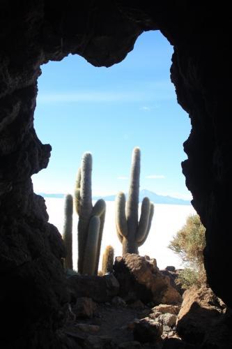 Bolivia - venster cactussen