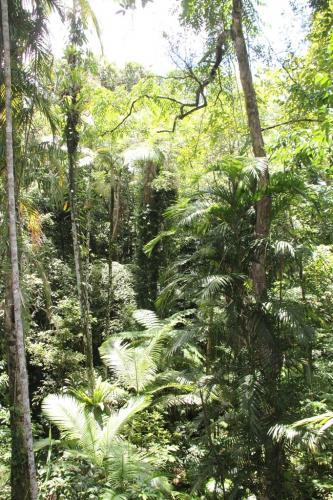 Daintree - Rainforest dicovery center