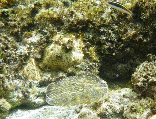 Fernando de Noronha - Onderwaterleven