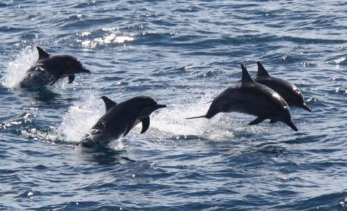 GBR - Dolgelukkige dolfijnen
