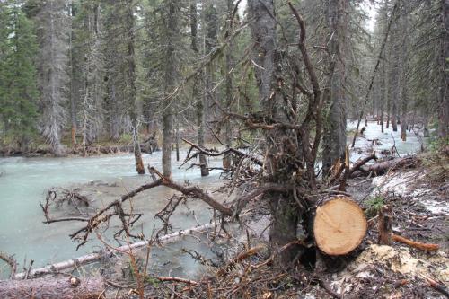 Glacier NP - bomen in water