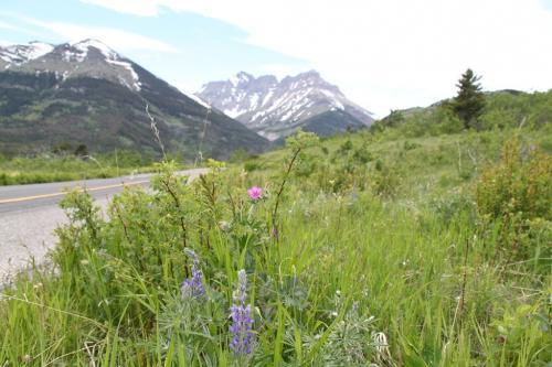 Glacier NP - wildlife route