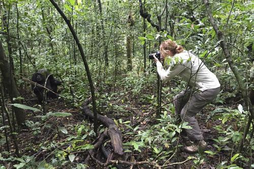 Fotograaf dede & Chimp