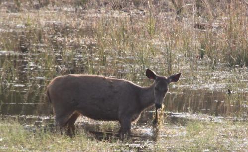 India - Hert eet wier