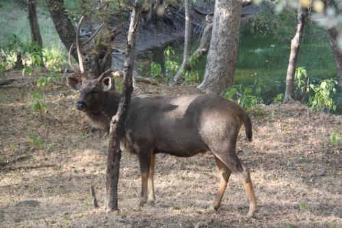 India - Safari