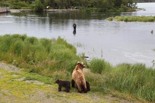 Katmai - fisherman and bear met cubs