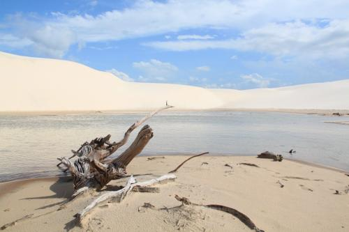 Lencois - Dunes & wood