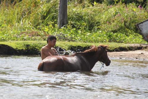 Lencois - Horse washing