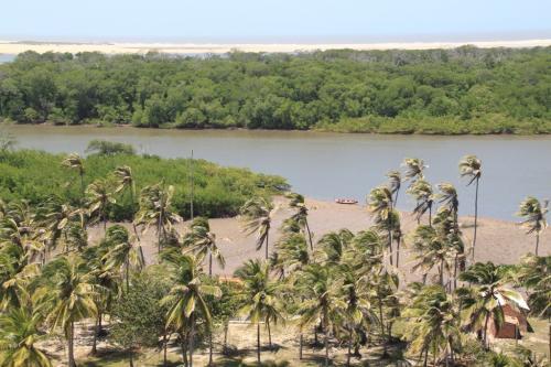 Lencois - Palmtrees