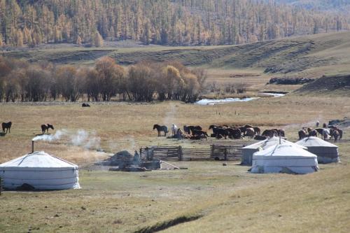 Mongolia - Traditionele gers