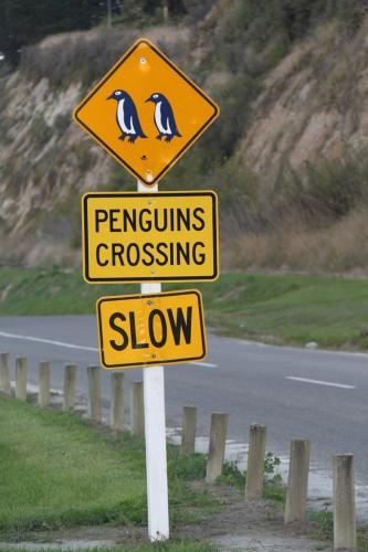 NZ - Pinguin kolonies