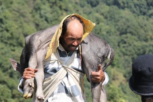 Nepal - kalf naar slachtbank