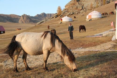 Nomaden - Grazende paarden