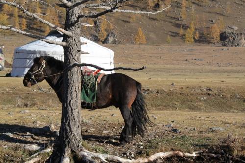 Nomaden - Paard & ger tent