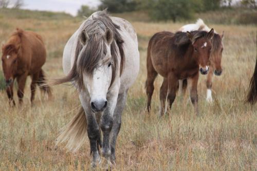 Nomaden - Paarden close up