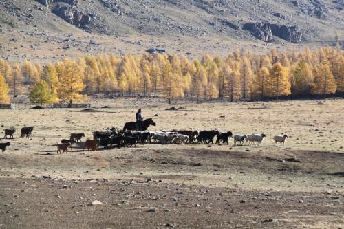 Nomaden - herder en schapen & geiten