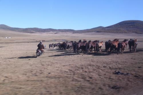 Nomaden - herder op moto