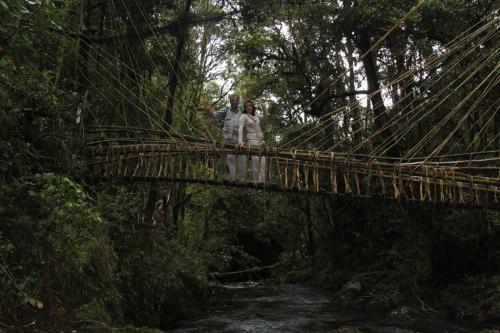 PNG - regenwoud