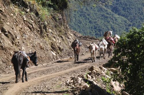 Peru - Donkeys