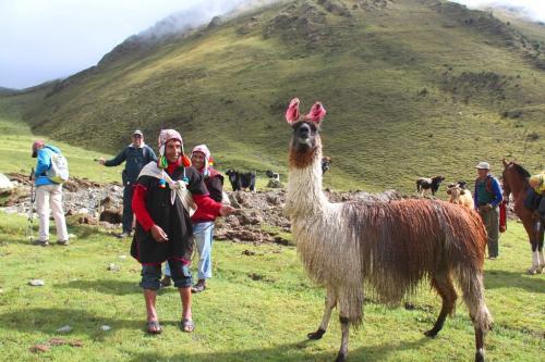 Peru - Lama met Shamans
