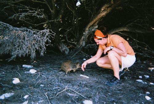 Rottness Island - Quokka dede