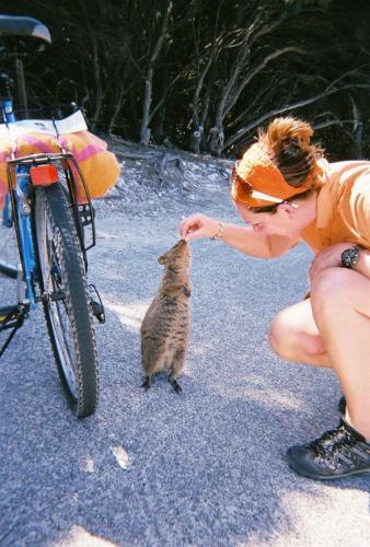 Rottness Island - Quokka feeding