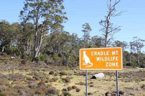 TAS - cradle wild life