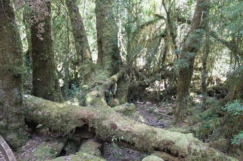 TAS - wildernis stronken