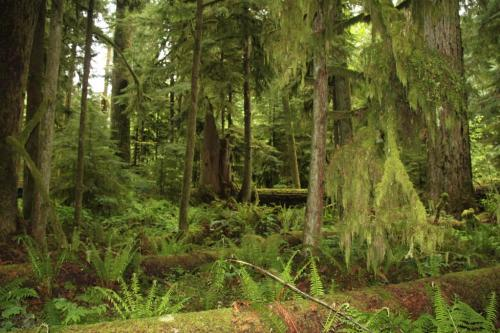 Vancouver Island - Cathedral Grove
