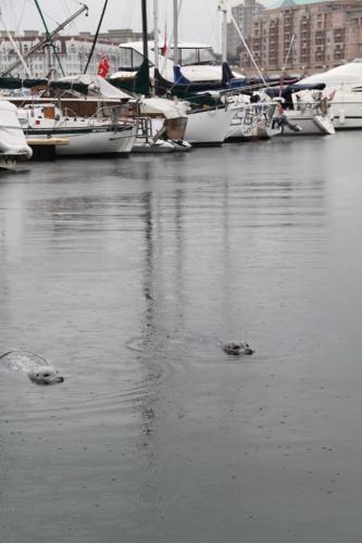Vancouver Island - zeehonden