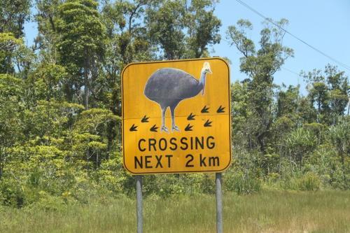 daintree - warning Cassowary