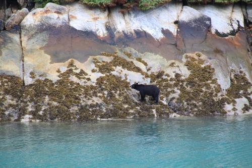 Alaskandream - Tracy arm bear